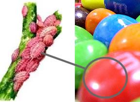 ladditif e 120 aussi dsign par lappellation acide carminique ou carmin est un colorant rouge dorigine naturelle - Colorant Naturel Rouge